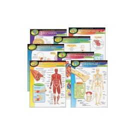 Trend The Human Body Chart Pack